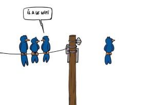 grappige vogeltjes